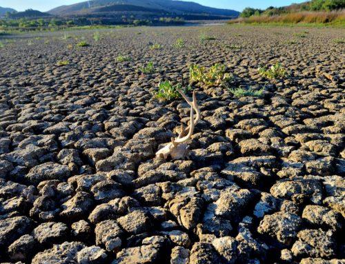Допълнителна подкрепа за земеделските стопани срещу последиците от сушата