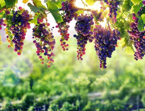 ЕК приема нови извънредни мерки в подкрепа на лозаро-винарския сектор